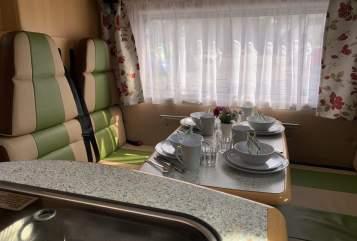 Wohnmobil mieten in Neumünster von privat | Fiat Ducato Sternrouter
