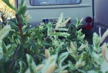 Wohnmobil mieten in Zahna-Elster von privat | Qek Qekemil