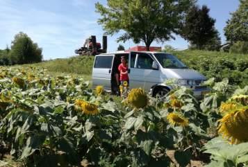 Wohnmobil mieten in Nistelrode von privat | Volkswagen Zilver bulli