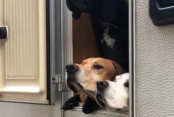 Wohnmobil mieten in Hamm von privat | Hobby Doggy
