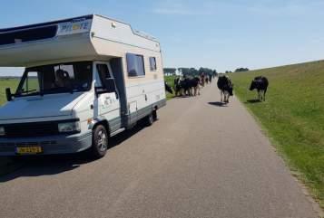 Wohnmobil mieten in Uden von privat | Peugeot Pilote familiecamper
