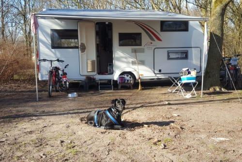 Wohnmobil mieten in Much von privat | Bürstner  Ragazzo